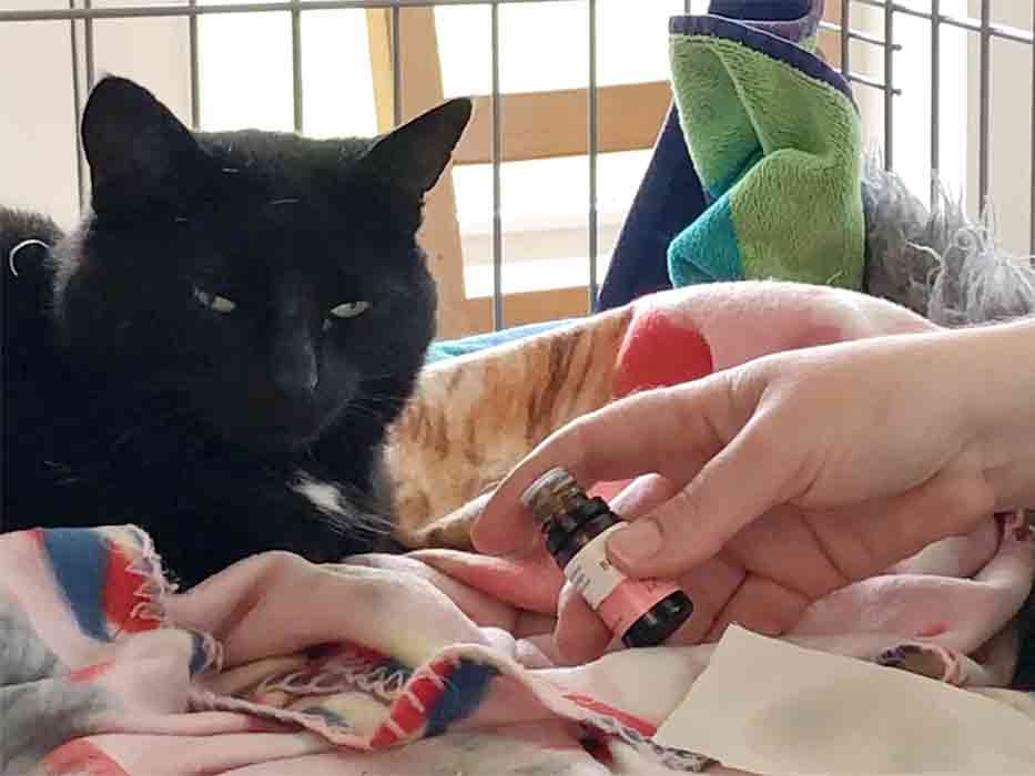 A Cat Presented With Essential Oil To Choose