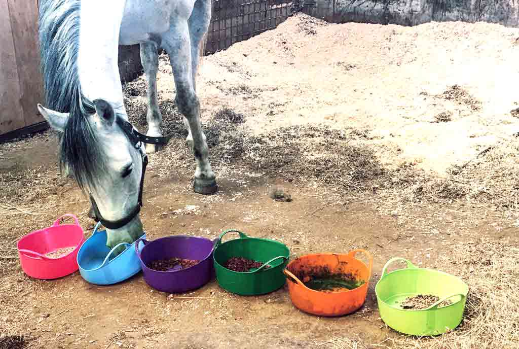 Horse With Selection Buckets